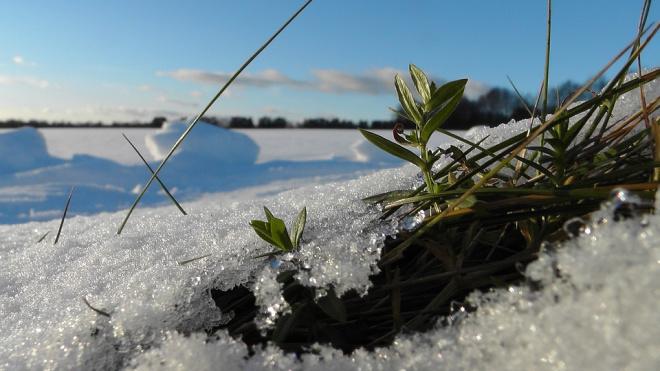 Выращивания  комнатных растений в условиях Крайнего Севера и Арктики