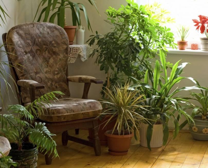 Анализ ассортимента наиболее популярных комнатных растений в домах наших соотечественников
